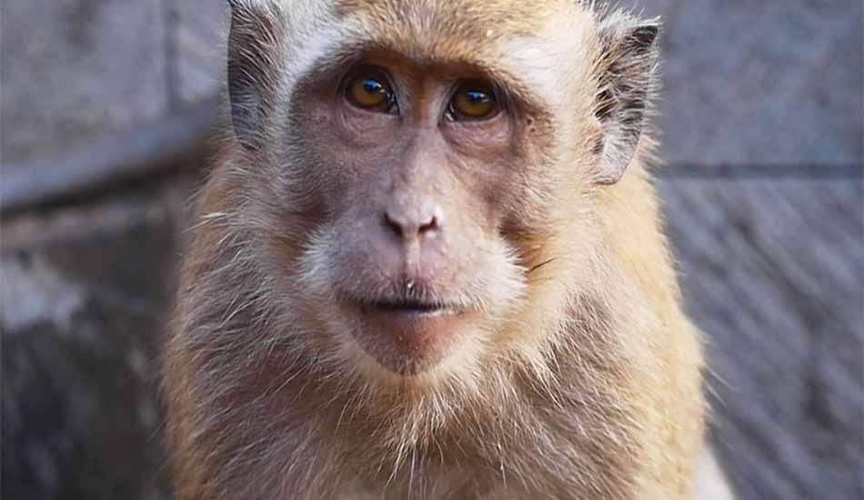 8-Monkey-opti